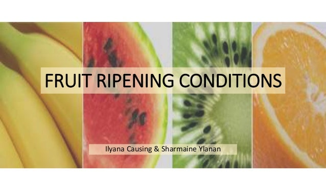 Fruit Ripening Conditions