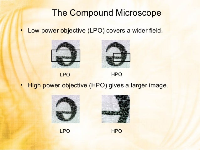 Introduction to the Light Microscrope KEY