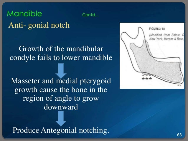 gonial angle as an indicator for growth pattern Eight angular (saddle angle, articular angle, gonial angle, n-s-gn, n-s-go, sna, snb and anb angles) and four linear (anterior facial height, posterior facial height, overjet and overbite) variables were measured from lateral head cephalograms and the values of the variables were evaluated and compared.