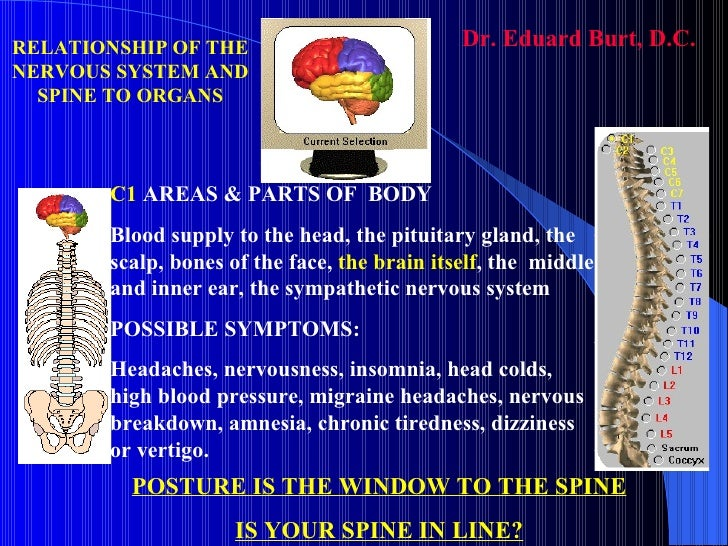 C1  AREAS & PARTS OF  BODY Blood supply to the head, the pituitary gland, the scalp, bones of the face,  the brain itself ...