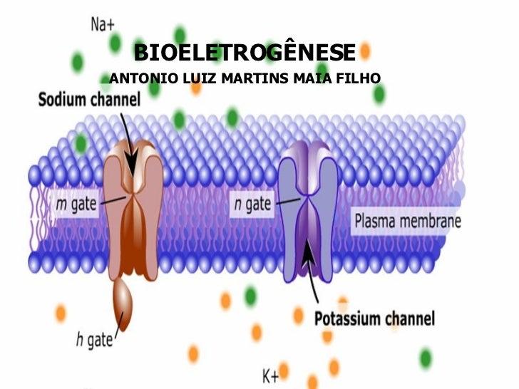 BIOELETROGÊNESE ANTONIO LUIZ MARTINS MAIA FILHO