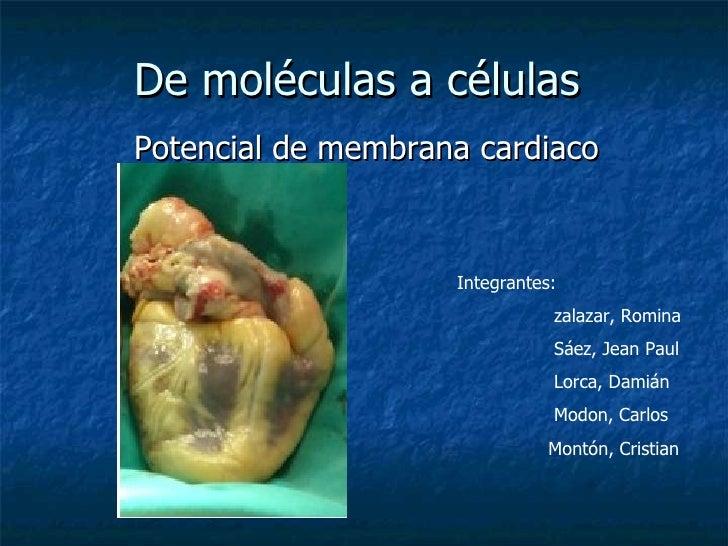 De moléculas a células  Potencial de membrana cardiaco Integrantes:  zalazar, Romina  Sáez, Jean Paul Lorca, Damián  Modon...