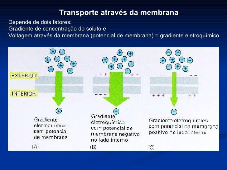 Depende de dois fatores: Gradiente de concentração do soluto e Voltagem através da membrana (potencial de membrana) = grad...