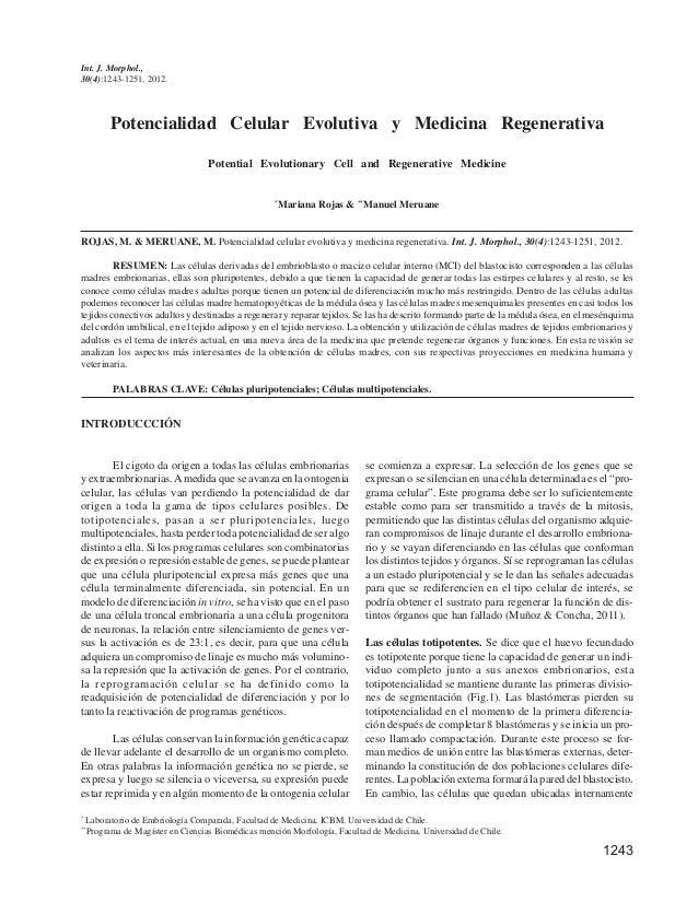 1243 Int. J. Morphol., 30(4):1243-1251, 2012. Potencialidad Celular Evolutiva y Medicina Regenerativa Potential Evolutiona...
