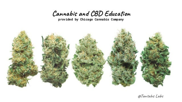 @Tan s La Can s a C Edu on provided by Chicago Cannabis Company