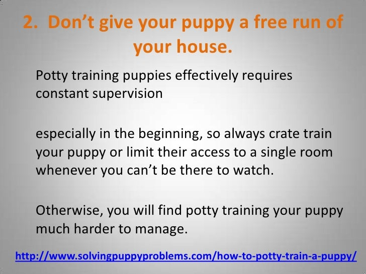 how to train a puppy to run with you
