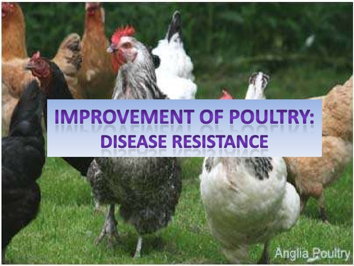 Improvement of Poultry: disease resistance<br />