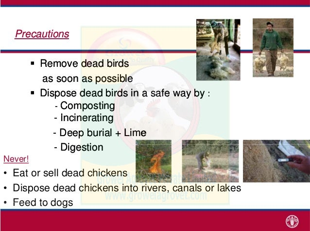 Poultry Diseases Cause, Diagnosis, Control & Treatment