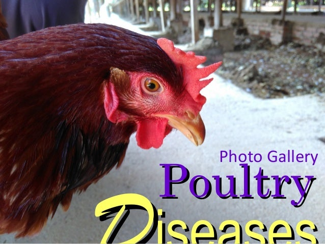 PoultryPoultry Photo Gallery