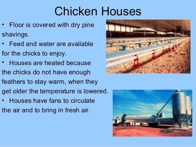 Poultry equipment for broilers Slide 3