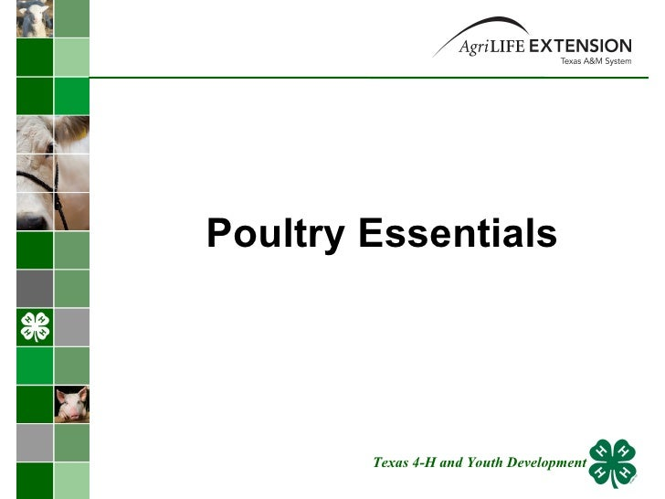 Poultry Essentials  Texas 4-H and Youth Development