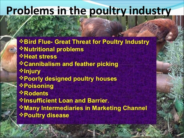 swot analysis of poultry meat industry in india Global processed poultry meat market to be driven by higher disposable (china, india, japan an array of graphics and swot analysis of major industry.