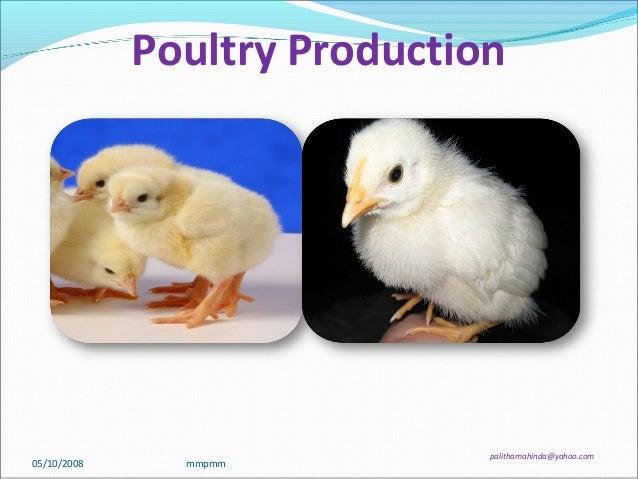 Poultry Production palithamahinda@yahoo.com 05/10/2008 mmpmm