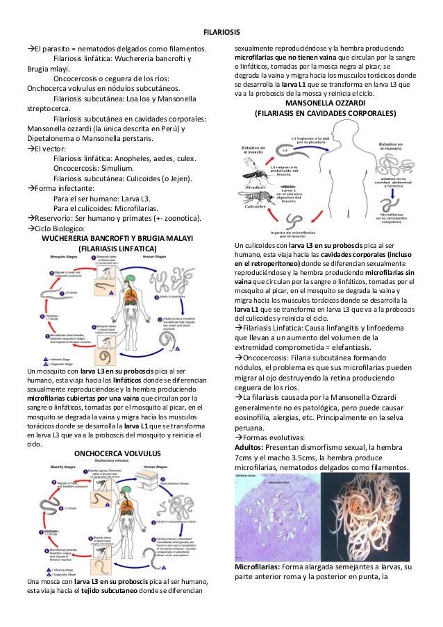 Guia de supervivencia teorico practico de parasitologia