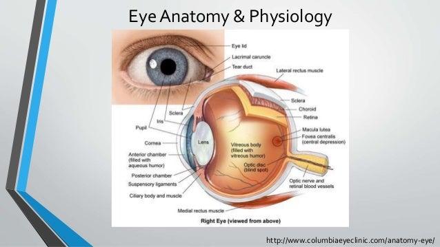 http://www.columbiaeyeclinic.com/anatomy-eye/ Eye Anatomy & Physiology