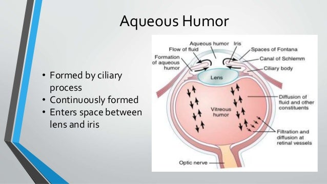 Aqueous Humor • Formed by ciliary process • Continuously formed • Enters space between lens and iris