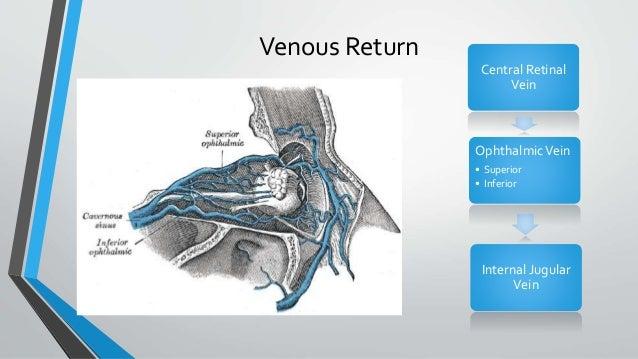 Venous Return Central Retinal Vein OphthalmicVein • Superior • Inferior Internal Jugular Vein