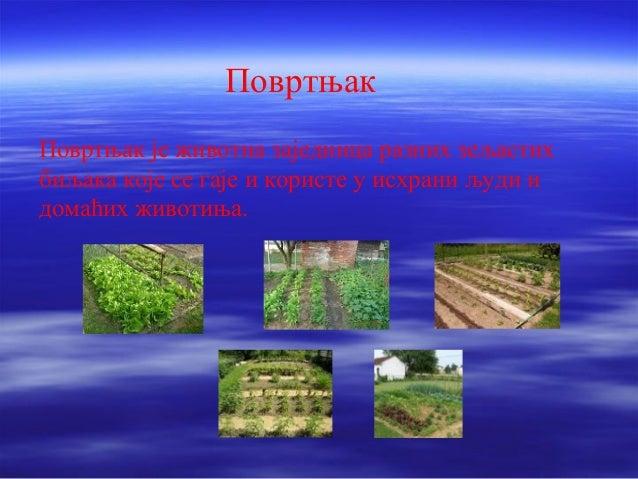 Повртњак  Повртњак је животна заједница разних зељастих  биљака које се гаје и користе у исхрани људи и  домаћих животиња.
