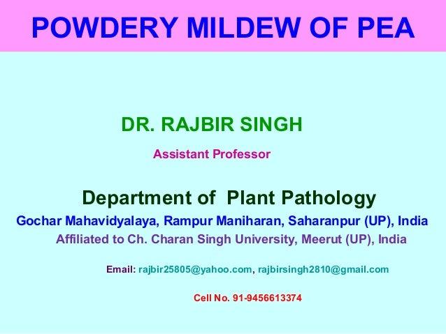 POWDERY MILDEW OF PEA DR. RAJBIR SINGH Assistant Professor Department of Plant Pathology Gochar Mahavidyalaya, Rampur Mani...
