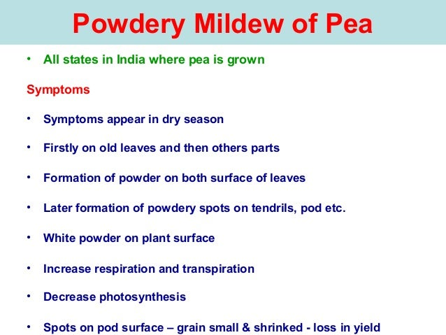 Powdery Mildew of Pea • All states in India where pea is grown Symptoms • Symptoms appear in dry season • Firstly on old l...