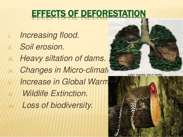 deforestation conclusion The european parliament resolution of 4 april 2017 on palm oil and deforestation  concluded a debate on the possibility of controlling palm oil.