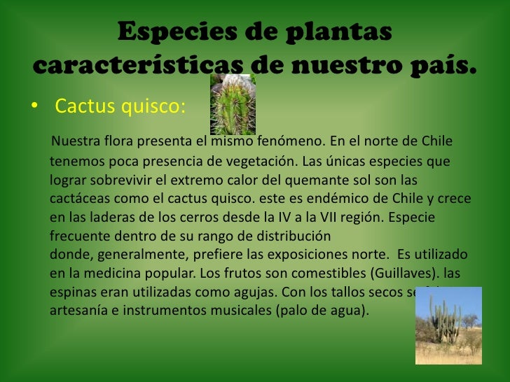 Especies animales y vegetales de nuestro pa s for Cactaceas de chile