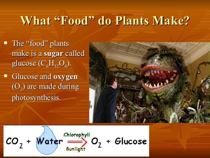 How Do Food Gives Organisms Energy