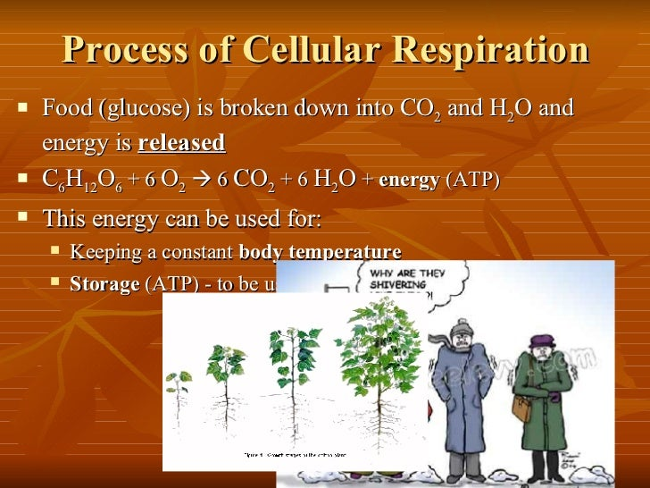 Usdgus  Pleasing Power Point  Cell Energy Photosynthesis Amp Respiration With Exciting   With Attractive Hyperlink In Powerpoint Also What Is A Powerpoint Presentation In Addition Powerpoint Tricks And How To Make Powerpoint As Well As Powerpoint Slide Show Additionally How To Apa Cite A Powerpoint From Slidesharenet With Usdgus  Exciting Power Point  Cell Energy Photosynthesis Amp Respiration With Attractive   And Pleasing Hyperlink In Powerpoint Also What Is A Powerpoint Presentation In Addition Powerpoint Tricks From Slidesharenet