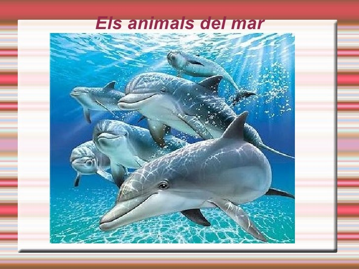 Els animals del mar