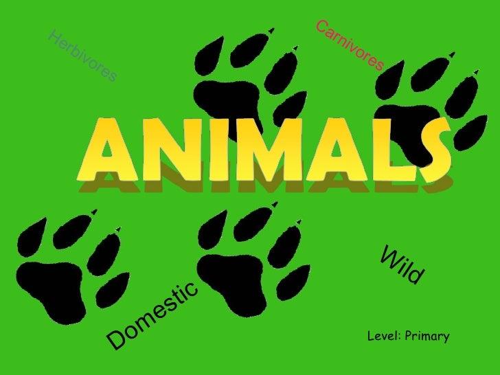 Level: Primary Wild Domestic Herbivores Carnivores