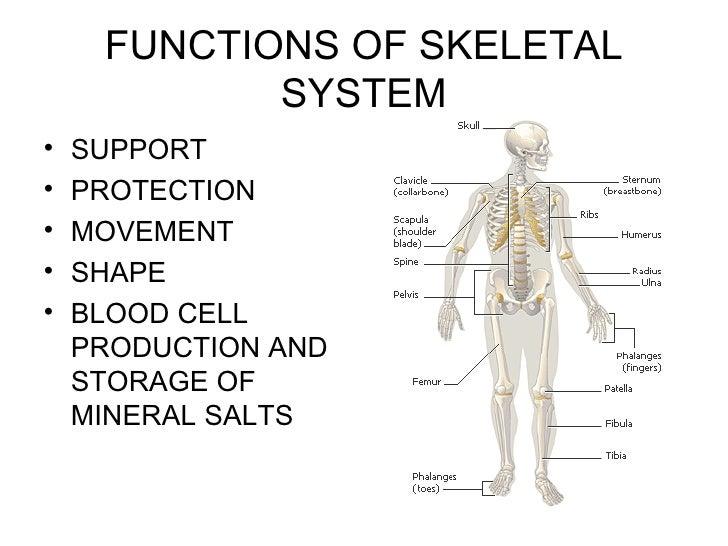 Power Point Skeletal