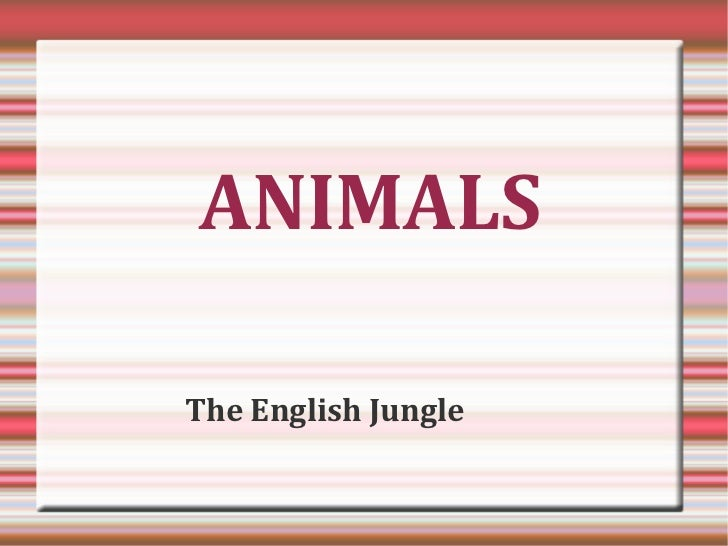 ANIMALSThe English Jungle