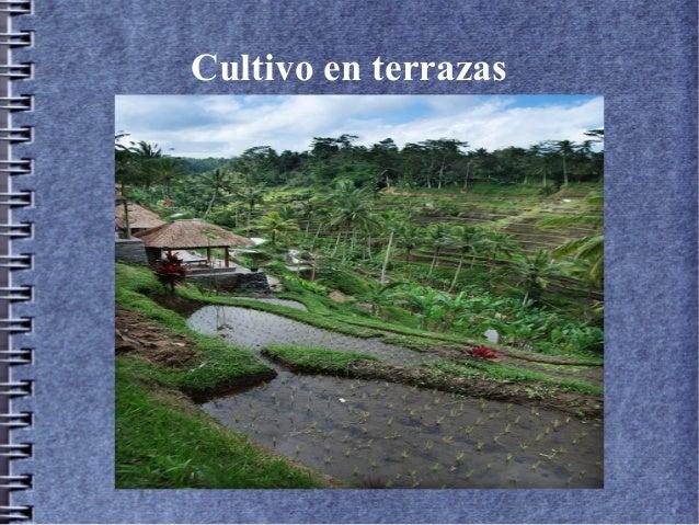 Imagen De Terraza De Cultivo
