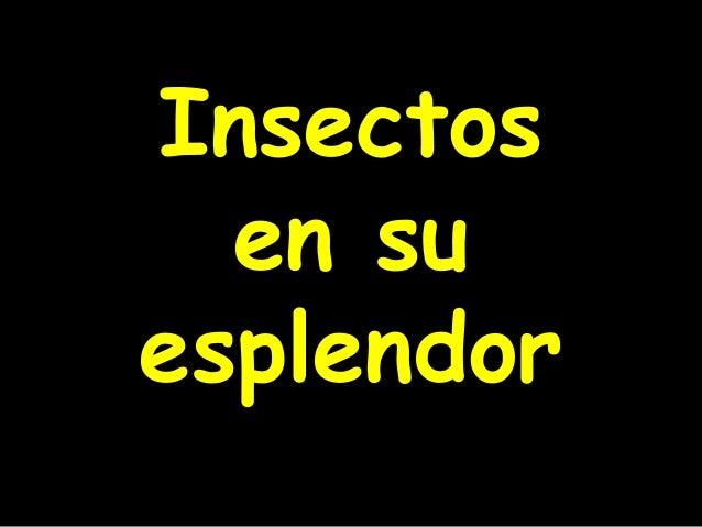 InsectosInsectos en suen su esplendoresplendor