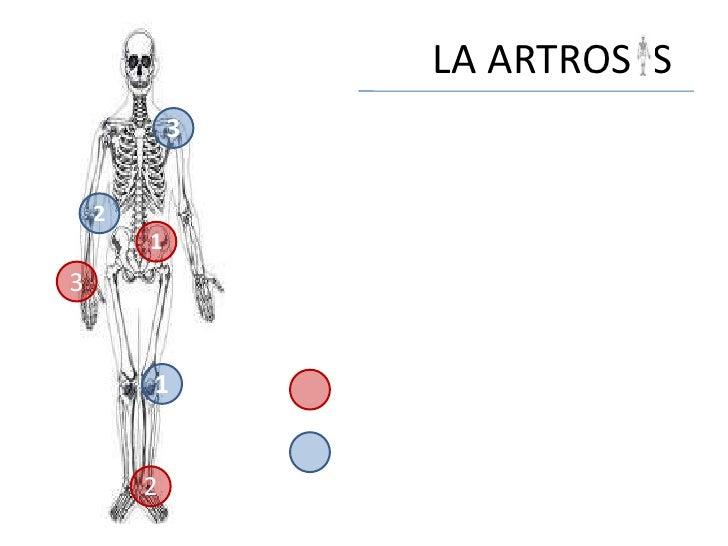 LA ARTROS S            3    2        13        1        2