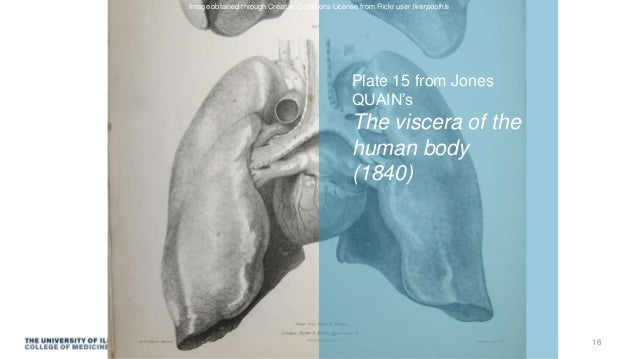 Plate 15 from Jones QUAIN's The viscera of the human body (1840) Image obtained through Creative Commons License from Flic...