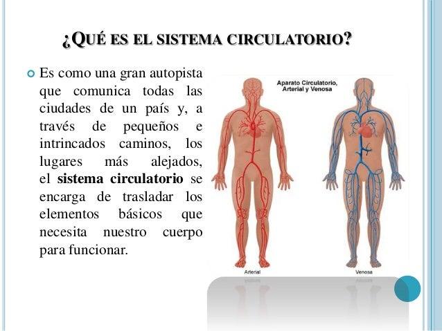 sistemas-del-cuerpo-humano-16-638.jpg?cb=1355172849