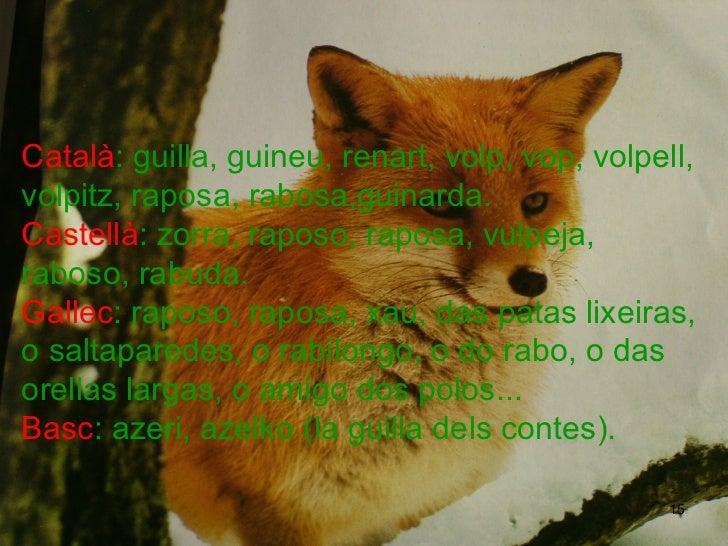 Català : guilla, guineu, renart, volp, vop, volpell, volpitz, raposa, rabosa,guinarda.  Castellà : zorra, raposo, raposa, ...