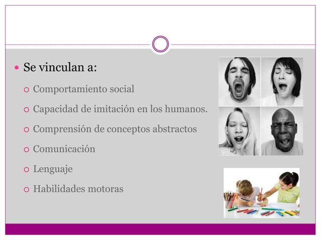  Se vinculan a:  Comportamiento social  Capacidad de imitación en los humanos.  Comprensión de conceptos abstractos  ...