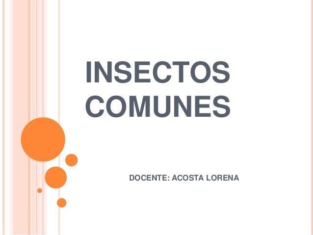 INSECTOS COMUNES DOCENTE: ACOSTA LORENA