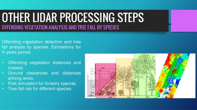 OFFENDING VEGETATION ANALYSIS AND TREE FALL BY SPECIES OTHER LIDAR PROCESSING STEPS Offending vegetation detection and tre...