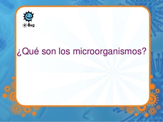 ¿Qué son los microorganismos?