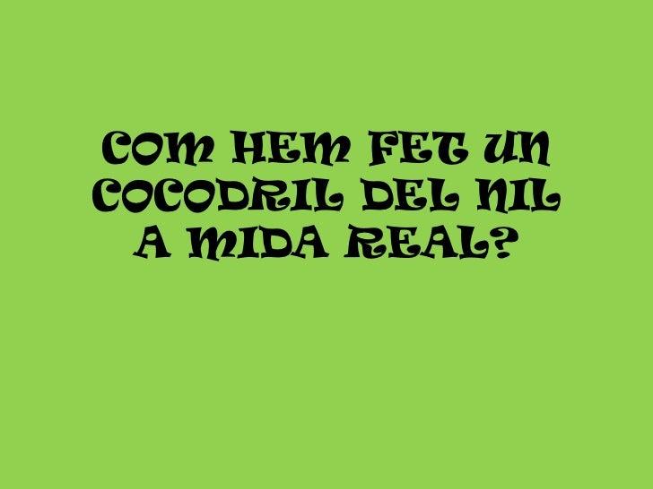 COM HEM FET UN COCODRIL DEL NILA MIDA REAL?<br />