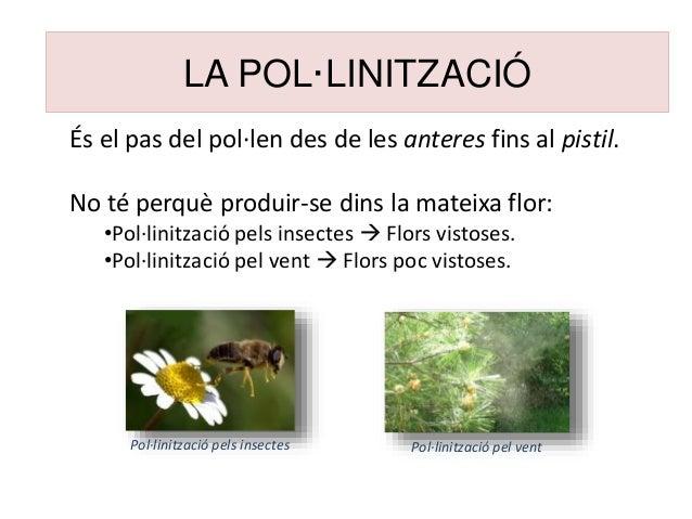LA POL·LINITZACIÓ És el pas del pol·len des de les anteres fins al pistil. No té perquè produir-se dins la mateixa flor: •...