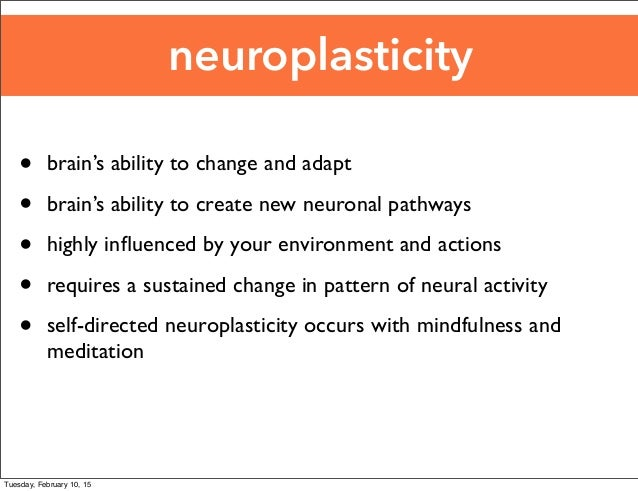 a discussion on meditations effects of neuroplasticity Meditation and learning and plasticity brought to question the neurological effects meditation may brain: neuroplasticity and meditation.