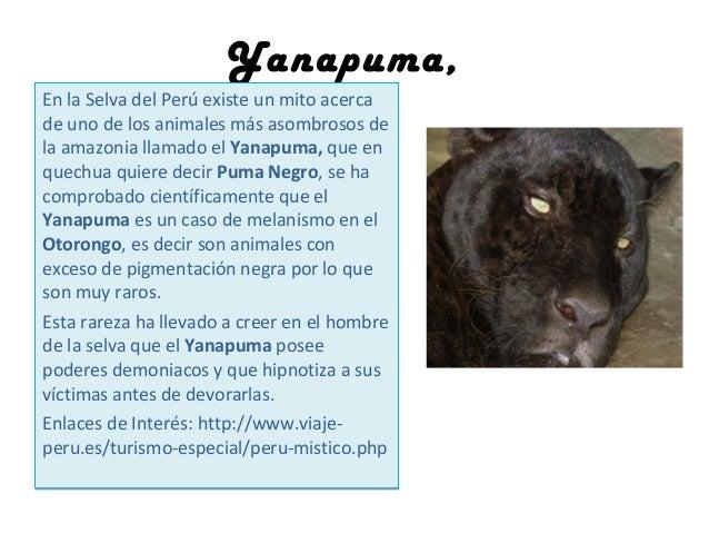 Yanapuma, En la Selva del Perú existe un mito acerca de uno de los animales más asombrosos de la amazonia llamado el Yanap...