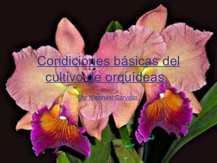 Condiciones básicas del cultivo de orquídeas.   Por Natanael Carvallo.