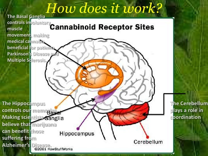 how to write of medical cannibis