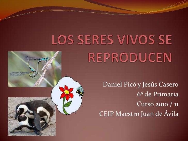 LOS SERES VIVOS SE REPRODUCEN<br />Daniel Picó y Jesús Casero<br />6º de Primaria<br />Curso 2010 / 11 <br />CEIP Maestro ...