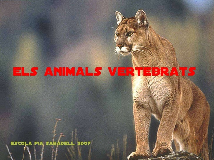 els animals vertebrats Escola pia sabadell 2007